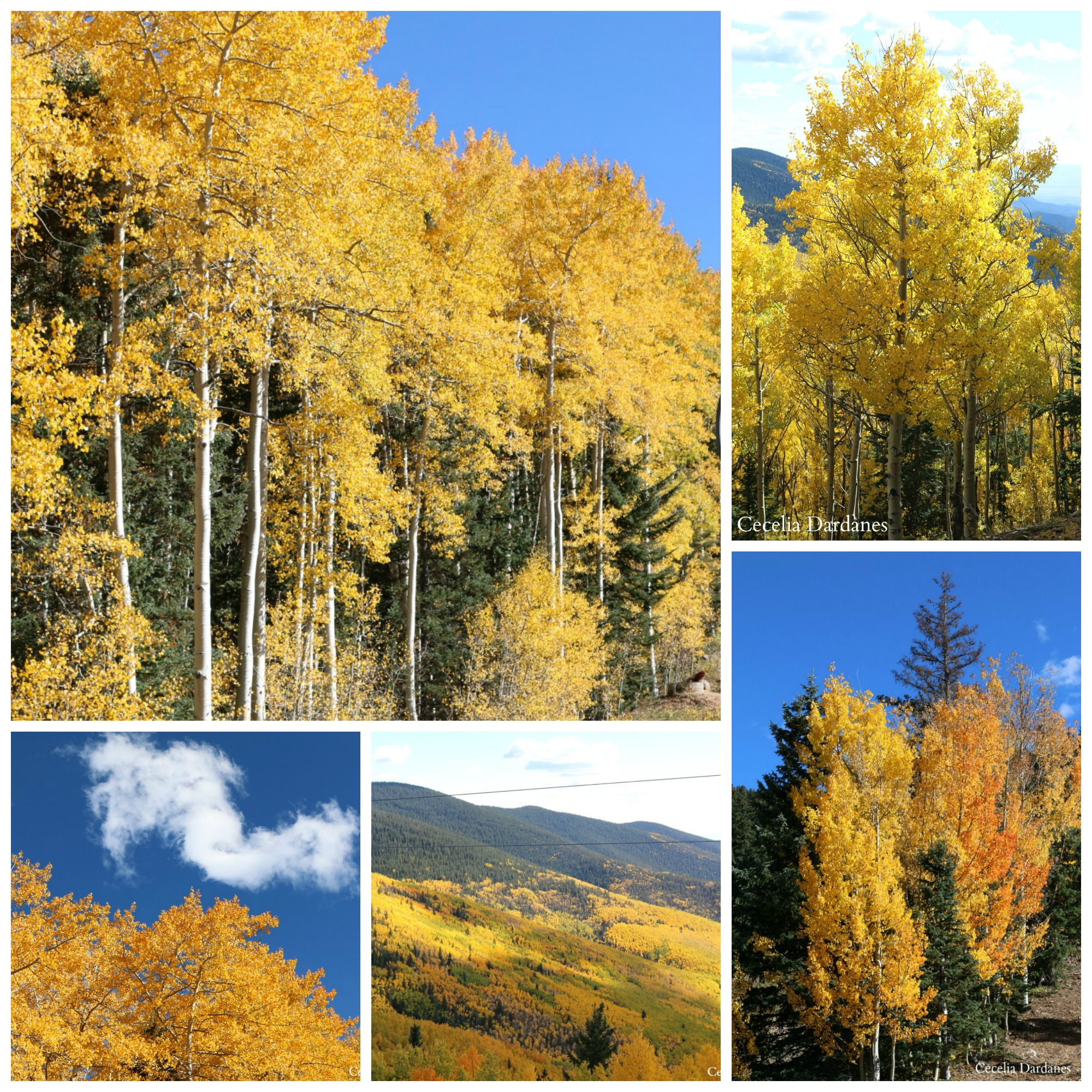 Fall in the mountains of New Mexico is so beautiful. I had friends in from out of town and we ventured up to Ski Santa Fe for the scenic chairlift ride during Balloon Fiesta. The colors were spectacular.