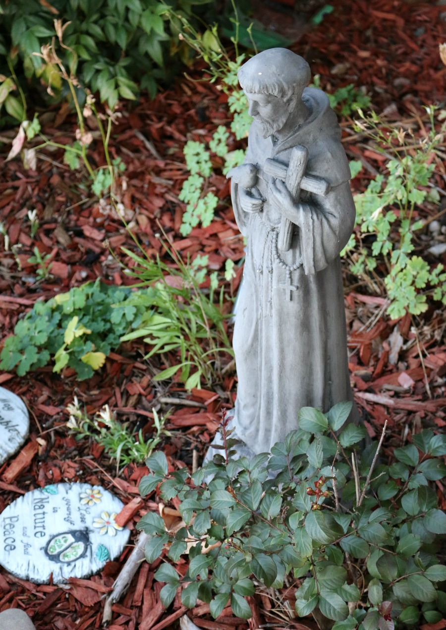 Saint Frances in my Garden