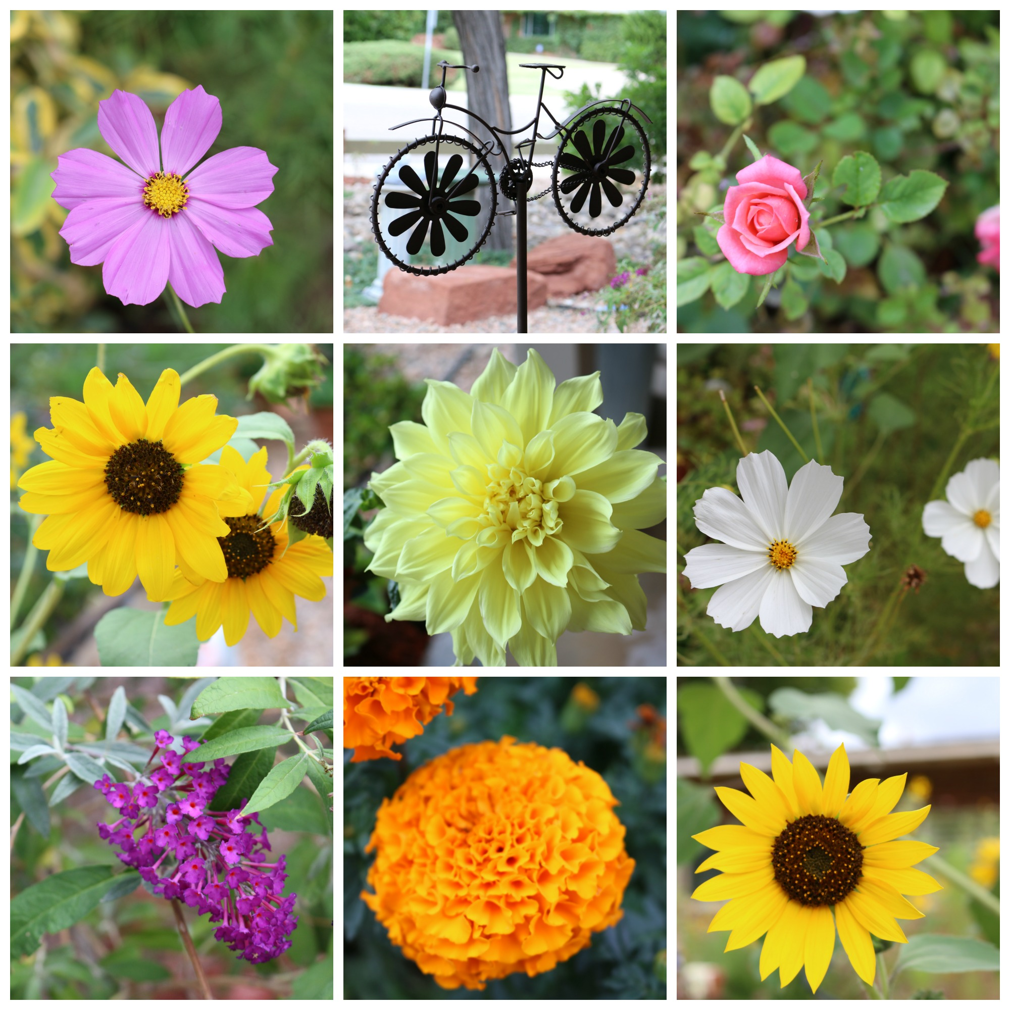 Summer Garden Flowers CeceliasGoodStuff.com Good Food and Good Things for Good People
