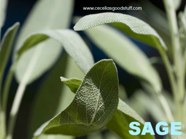 Sage the Herb