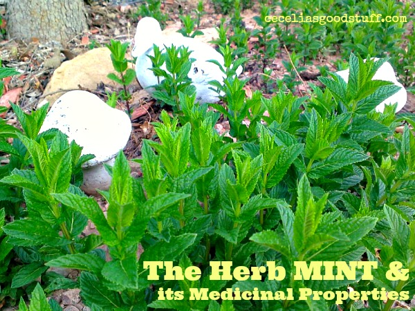 The Herb Mint