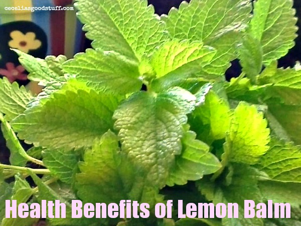 Lemon Balm a Powerful Herb