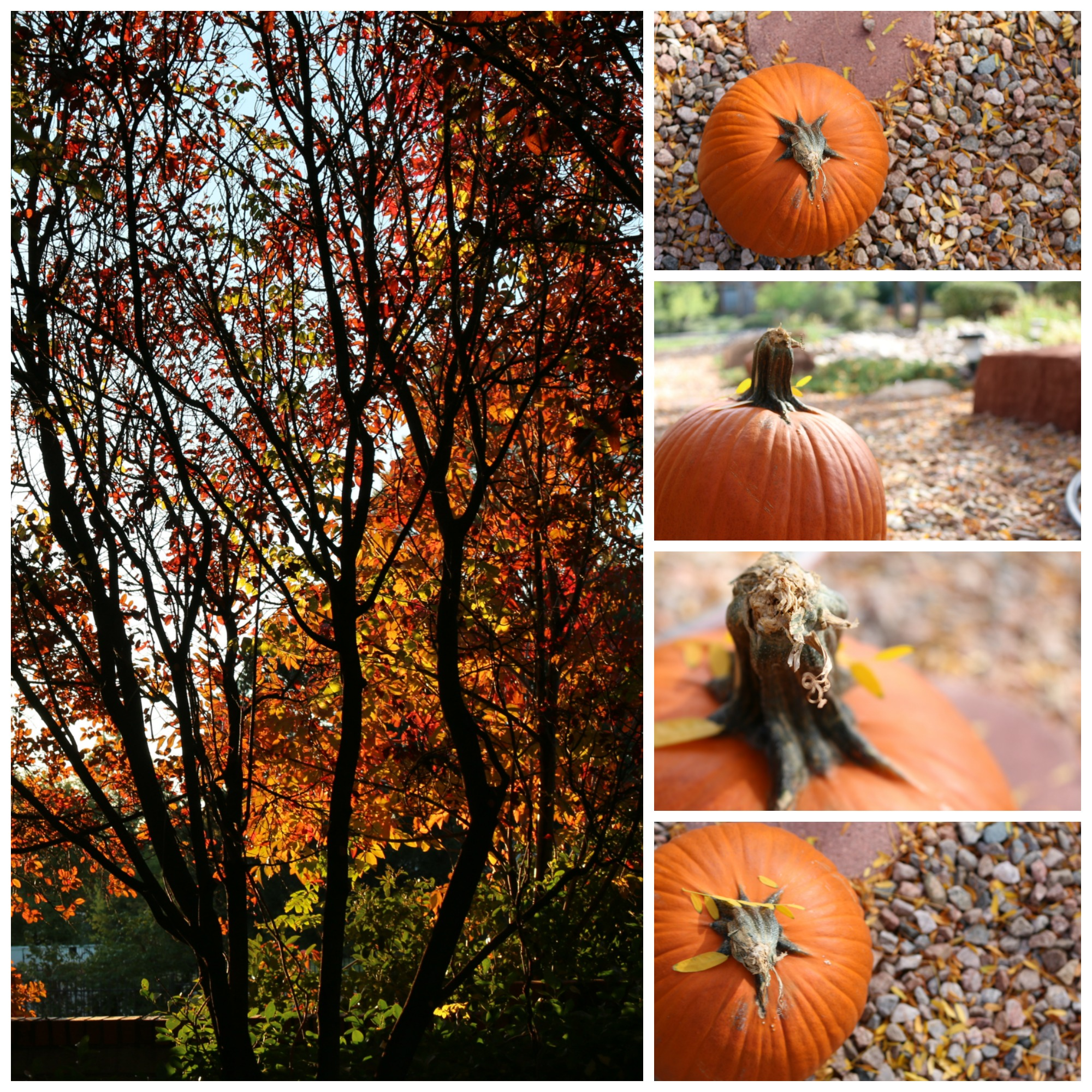 The collage is a collection of my daughter's images. She has quite an eye for a twelve year old.