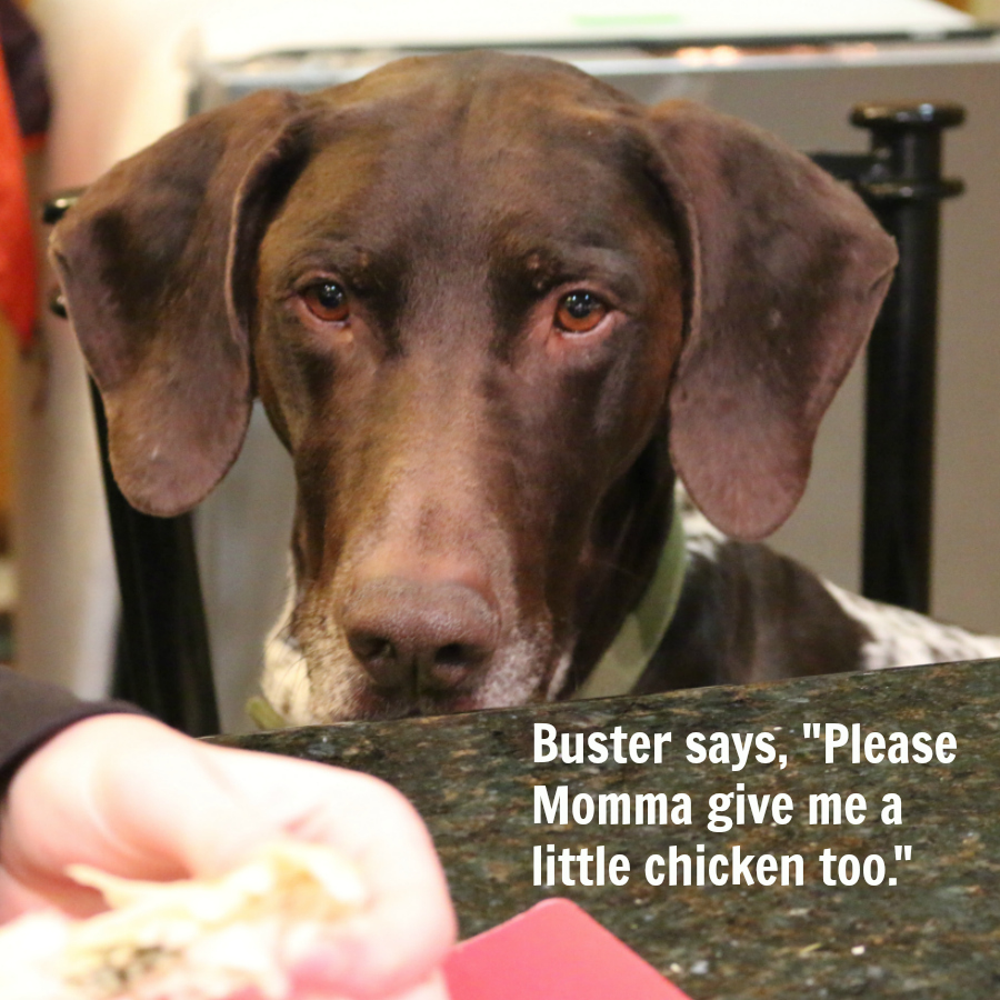 Buster wants Chicken too!