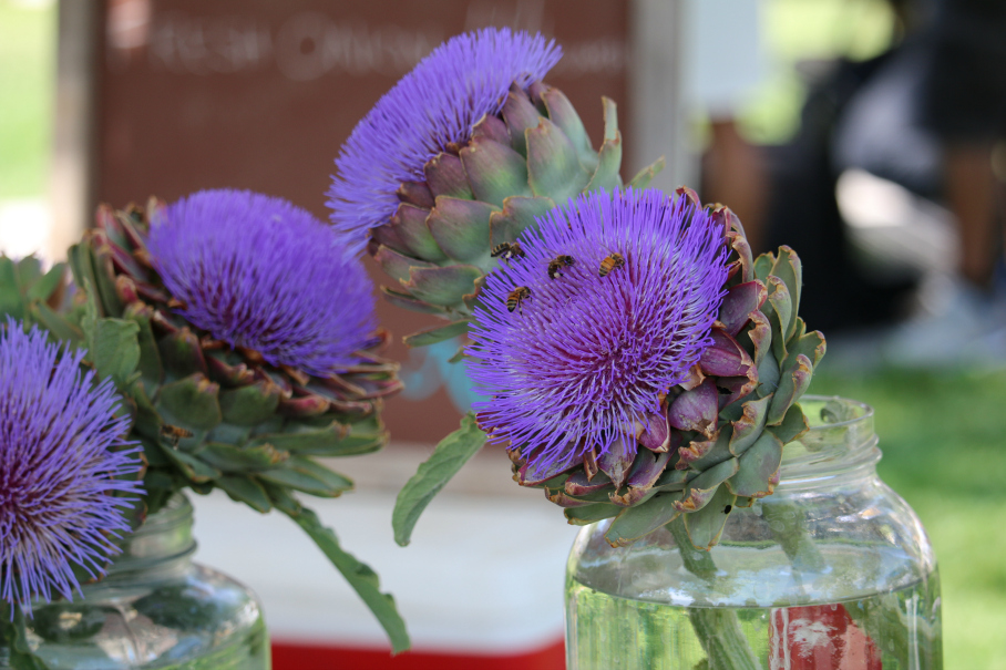 Fresh picked artichoke flowers at the Albuquerque Downtown Growers Market. CeceliasGoodStuff.com Good Food for Good People