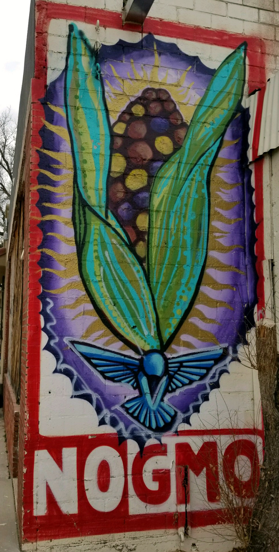 No GMO Blue Corn ART - Albuquerque, New Mexico | CeceliasGoodStuff.com | Good Food for Good People