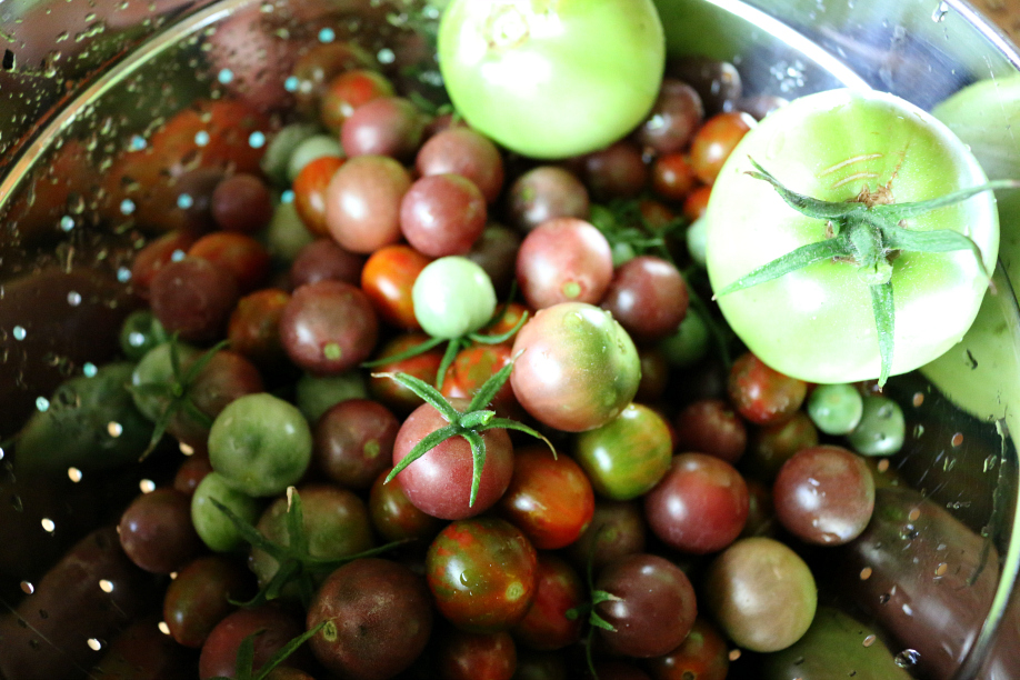 Heirloom Tomatoes from my garden. I had to pick most of them early because a severe hail storm. Not too bad for my first real crop this year. CeceliasGoodStuff.com| Good Food for Good People