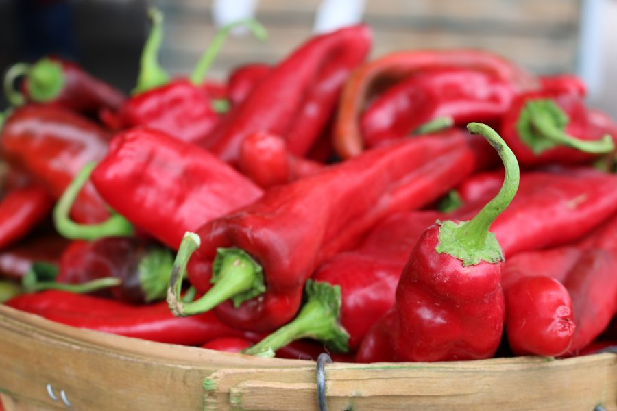 It is almost time to start harvesting our New Mexico Chile crop! I can hardly wait! Red Chile Peppers CeceliasGoodStuff.com | Good Food for Good People